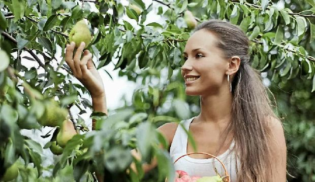 Young lady on holiday visa picking fruit